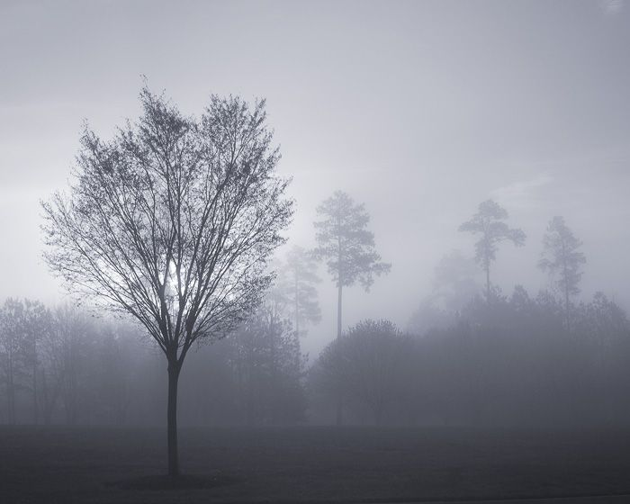 c50-Small Tree in Fog.jpg
